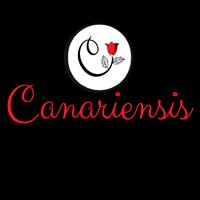 Canariensis – Canaria